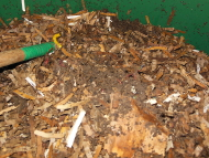 A Look Inside a Large-Scale Worm Bin